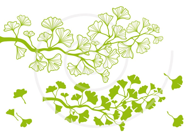Ginkgo tree branch digital clip art green ginkgo leaf