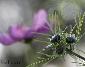 Enchanted Garden - Fine Art Photograph