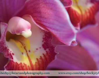 Pink Cymbidium Orchid Photo Print