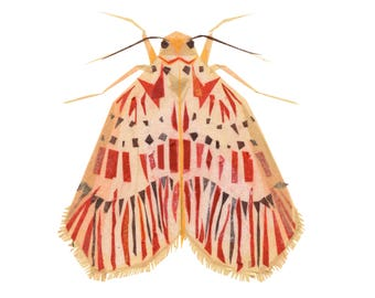 Frankie Footman Moth - Moth Art Print, Moth Decor, Insect Art Print
