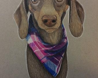 Custom Pet Portrait • Framed • Colored Pencil