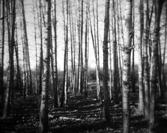 black white landscape, black white forest, holga, autumn photo, forest photo, autumn forest, dreamy landscape, landscape, tree wall art, zen