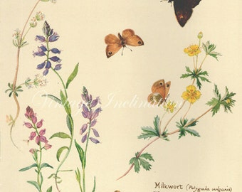 Antique Print, English Flowers Butterflies, Edwardian chart beautiful wall art vintage color lithograph illustration 74 butterfly garden