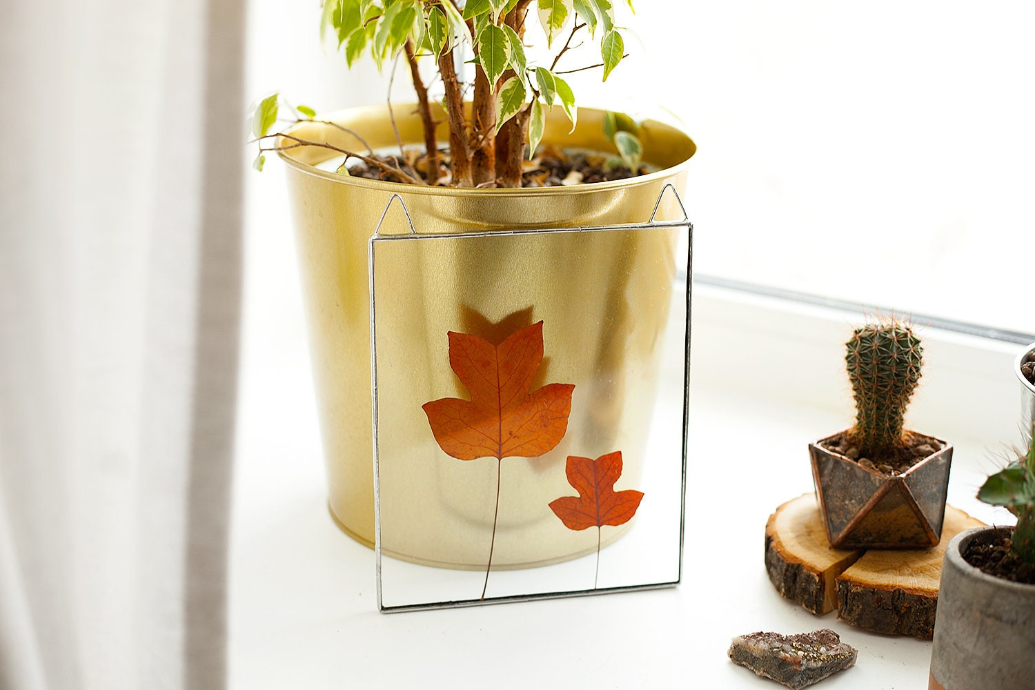 Glass wall panel real pressed leaves fall home decor natural