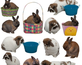 Spring, Easter Bunny  Overlays. 12 Real Bunnies.