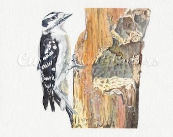 Downy woodpecker watercolor print