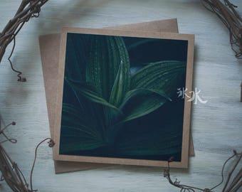 Floral Photo Card - Veratrum viride - False Hellebore