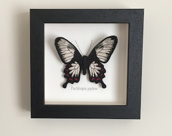 Butterfly picture, embroidered and hand painted butterfly in black wooden box frame, Ceylon Rose, textile art, framed butterfly