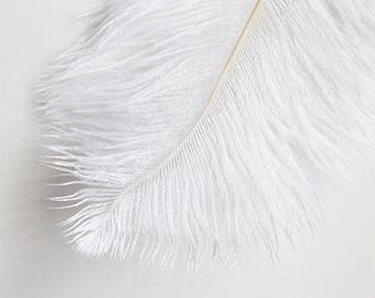 Ostrich Plumage Feathers Bleached White 10-12″ | 5 pcs.