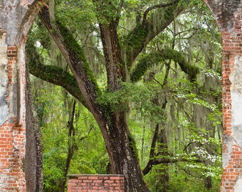 South Carolina Sheldon Church Ruins View from the Inside - 8 x 10 or 11 x 14 Photograph