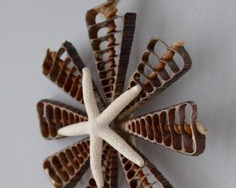 Telescope Shell Ornament with Linkia Sea Star