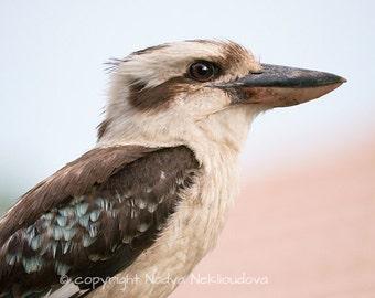 Kookaburra photo print - choose size - Fine Art nature decor, bird photography, bird wall art, Australian art, wildlife photography, nature