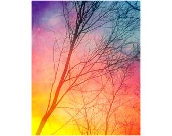 Fine Art Prints, Colorful Art, Sunset Art, Tree Photography, Nature Wall Art, Forest Art, Winter Sunset Photography, Bare Trees, Vertical