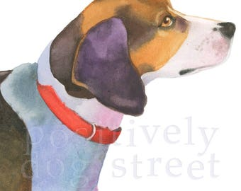 American Foxhound fine art dog print. Limited edition.