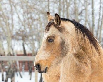 5X7 horse photography print