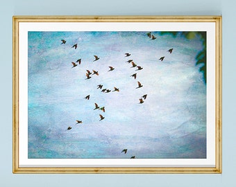 Parrot Print, Parrot Art, Tropical Print, Bird Art, Flying Birds, Bird Wall Art, Blue Art Print, Bird Photography, Costa Rica, Bird Decor