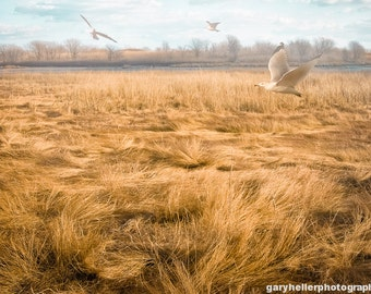 January Afternoon, Dreamy Golden Swirling Color Landscape, Birds, Fine Art, Free Shipping