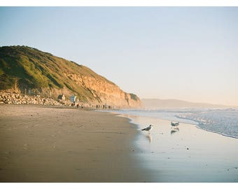 Torrey Pines Gulls | California Coast | Fine Art Photography Print by Heidi Vail | Travel & Landscape Photography | Wall Decor