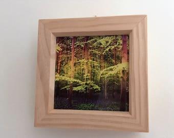 Enchanted wood 4x4 print