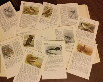 15 x vintage book pages of Birds from an Observer book. Smash book, scrapbooking, junk journal, collage, decoupage
