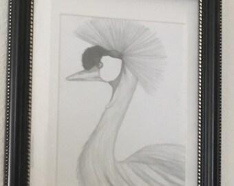 Endangered Species Drawings