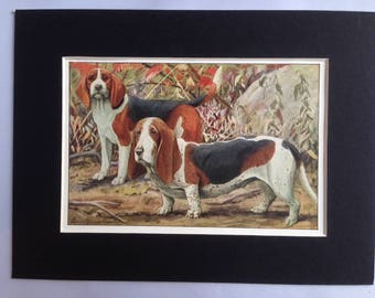 BEAGLE BASSET HOUND hunting dogs Louis Agassiz Fuertes Vintage Mounted 1919 plate print Congratulations Christmas Birthday gift