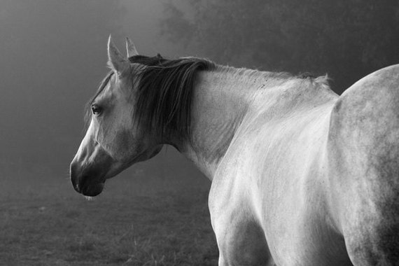 Sale gray fog black and white horse photography