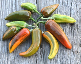 Hot Pepper Seeds, Fish Peppers, Heirloom Pepper Seeds, Great for Container Gardens and Small Space Gardening, Easy to Grow Organic Peppers