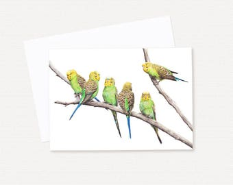 Budgerigars - Blank Greeting Card - Australian Bird Card