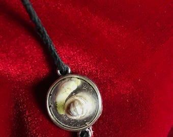 Pillbug/Tooth Bracelet.
