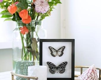 Real framed butterflies: black & white butterflies