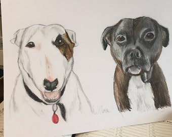 Pastel pencil drawing,artwork ,commission,personalised,to order,animals,pet portraits,pencil drawings,for animal lovers