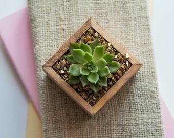 Lady Isabelle - Elegant Succulent Planter