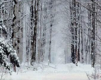 Winter snow scene, winter trees, digitally enhanced photo