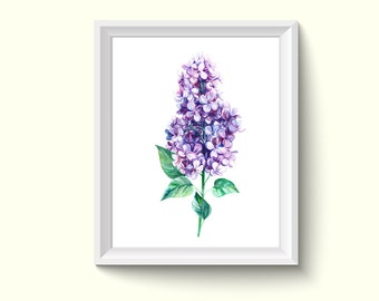 Lilac Flower Watercolour Painting Drawing Art Print N193