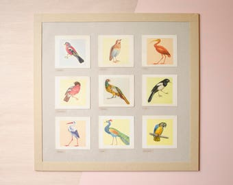 Birds of the world > framed * French vintage * Christmas gift * Old school * Antique print