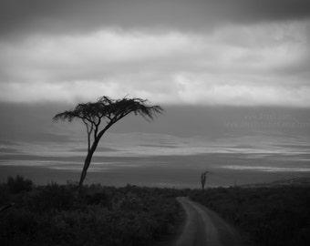 Stunning Black and White Gallery Quality Fine Art Photograph. Ngorongoro Crater Safari, Tanzania. Wall, Home, Office Art Drexll Studios