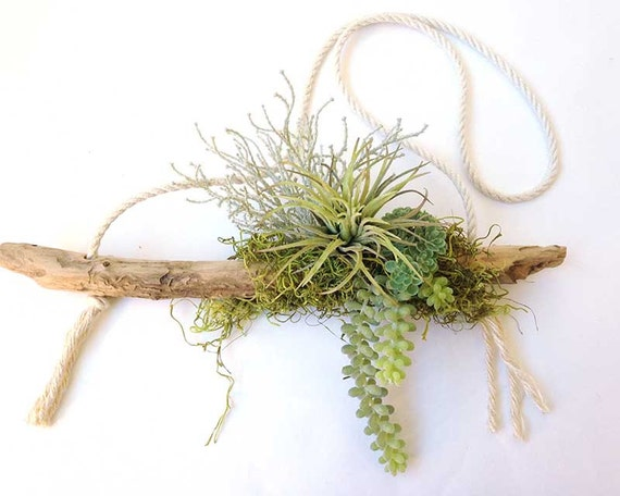 Hanging air plant air plant driftwood bohemian decor for Air plant decoration