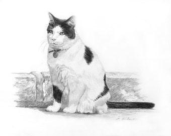 Black and White Cat Art, Cat Art Print, Cat Art, Black and White Cat Drawing, Cat Drawing Print, Cat Graphite Pencil Drawing by P. Tarlow