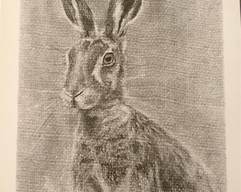 Graphite hare drawing