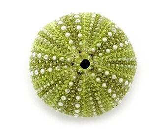 Sea Urchin photograph - Maine, beachcombing, seashells, beach art