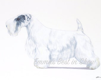 Sealyham Terrier Dog - Archival Fine Art Print - AKC Best in Show Champion - Breed Standard - Terrier Group - Original Art Print
