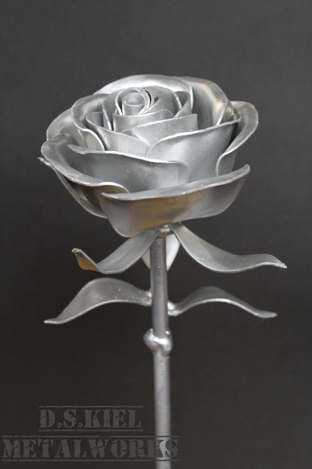 Silver Rose Flower Gallery Photo