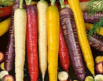 OP Rainbow Carrot vegetable Seed Beautiful red,white,orange & purple roots! Beautiful in a veggie platter!