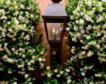 Charleston Sweet Jasmine and Gas Lanterns