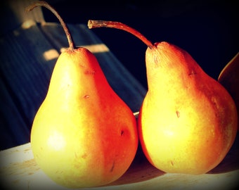 Two Pears still life fine art photo food art digital download