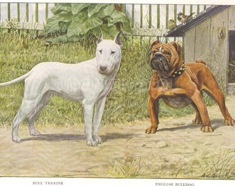 1919 Print White Bull Terrier and English Bulldog Outside Doghouse by Louis Agassiz Fuertes