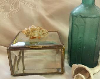 Shell jewelry box Etsy