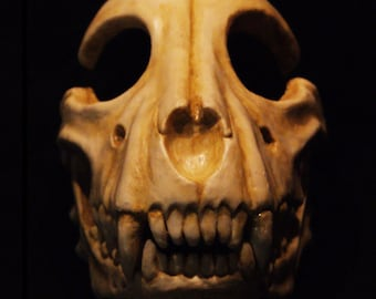 Dog skull  with moves the jaw! mask by Maskcraft
