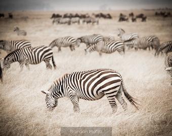 "Photo Print: ""Mesmerize"" - Zebra with Herd, Serengeti National Park, Tanzania"